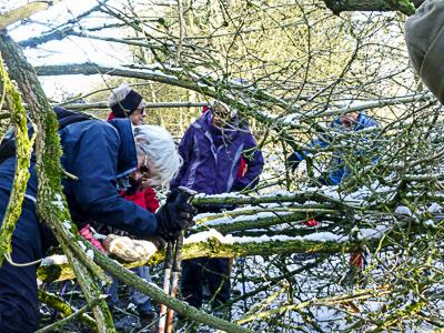 Negotiating fallen trees