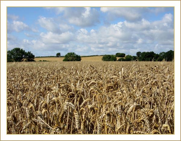 Fields Of Gold - Angela